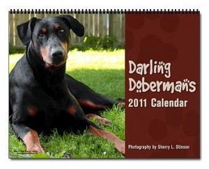 2011 Darling Dobermans Calendar