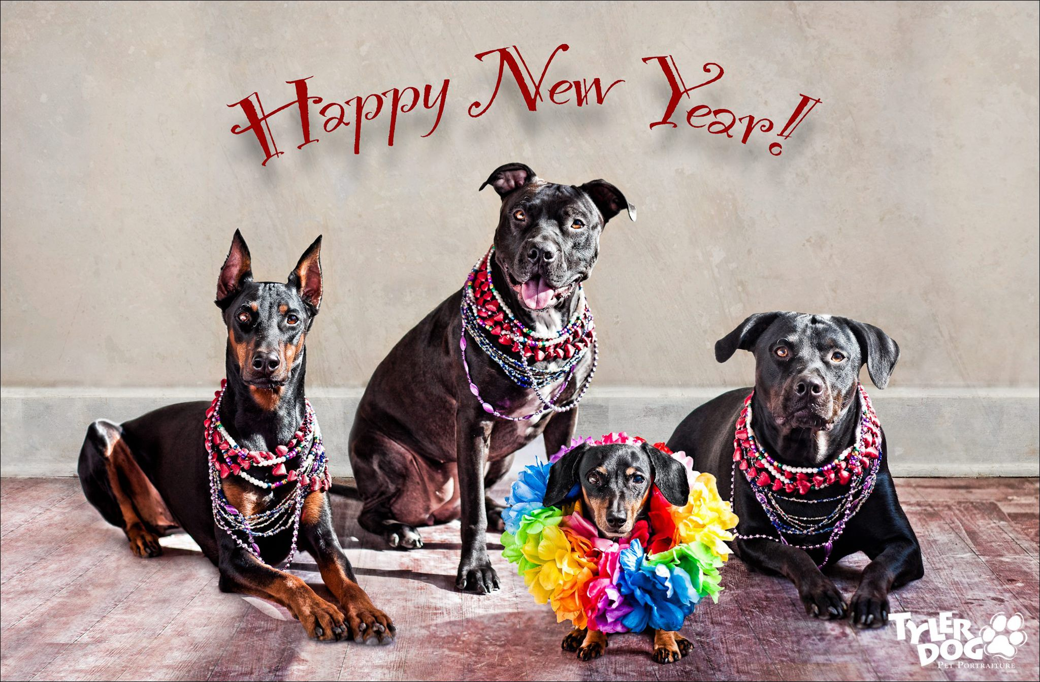 Happy New Year from Dopey Katie, Big Head, Jazzy the Amazing Wiener and Maggie Monster aka Katie, Xena, Jazzy and Maggie.